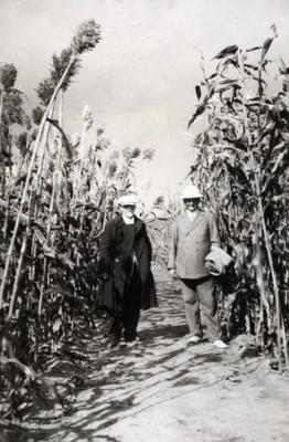 N.E. Hansen in a Kaoliang sorghum field at Echo in Manchuria, Ch